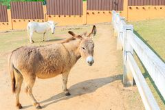 Cute brown donkey. Cute brown donkey in the farm background Stock Photo