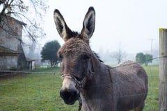 Cute brown donkey at farm Stock Photos