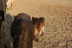 Cute brown foal horse paddock Royalty Free Stock Photos