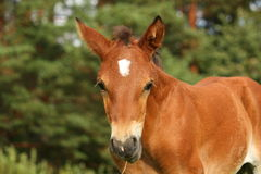 Cute brown foal portrait in summer Stock Photo