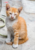 Cute brown kitten sit on concrete floor Stock Image