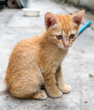 Cute brown kitten sit on concrete floor Royalty Free Stock Photography