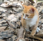 Cute brown kitten toileting Royalty Free Stock Photo