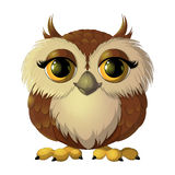 Cute brown owl. With big eyes Stock Image