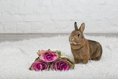 Cute brown rabbit  with flowers Stock Photo