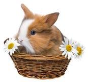 Cute brown rabbit Stock Photo