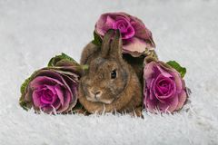 Cute brown rabbit  with flowers Stock Photos