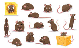 Cute Brown Rat Various Poses Cartoon Vector Illustration Stock Images