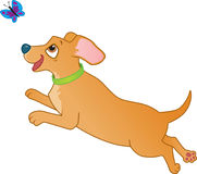 Cute brown sausage dog chasing a butterfly Royalty Free Stock Photo