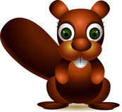 Cute brown squirrel cartoon Stock Photos