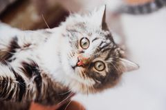 A cute brown striped kitten. Portrait on the blurred background royalty free stock image