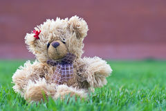 Cute brown teddy bear Stock Images