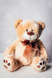 Cute brown teddy bear Royalty Free Stock Images