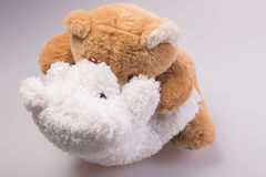 A cute brown teddy bear Royalty Free Stock Images