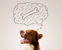 Border collie with thought bubble thinking about a bone Stock Images