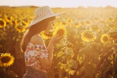 Cute brunette in a blossoming sunflower field stock image