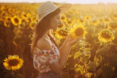 Cute brunette in a blossoming sunflower field stock photography