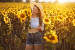 Cute brunette in a blossoming sunflower field royalty free stock photos