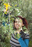 Cute brunette woman collecting olives Royalty Free Stock Photography