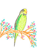 Cute budgerigar on tree branch. Hand drawing illustration Royalty Free Stock Image