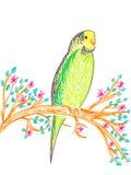 Cute budgerigar on tree branch. Hand drawing illustration Vector Illustration