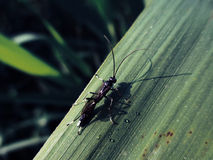 Cute bugs. And insects picture material, insect, plant, cute, tiny, clear, under macro creatures, living world Royalty Free Stock Photo
