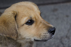 Cute Bulgarian street dog Royalty Free Stock Image
