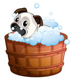 A cute bulldog inside the bathtub Royalty Free Stock Photo