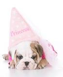 Cute bulldog puppy Royalty Free Stock Photos