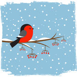 Cute bullfinch on branch rowan. Vector illustration royalty free illustration