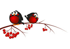Cute bullfinches. On a rowan branch vector illustration