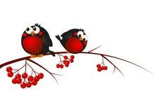 Cute bullfinches. On a rowan branch Vector Illustration