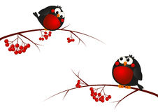 Cute bullfinches. On a rowan branches stock illustration