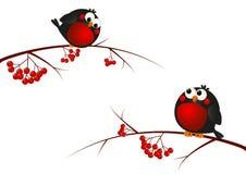Cute bullfinches. On a rowan branches Stock Illustration