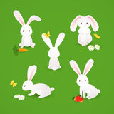 Cute bunnies Royalty Free Stock Images