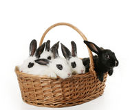 Free Cute Bunnies Royalty Free Stock Photos - 4649408