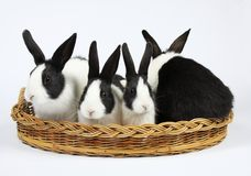 Cute bunnies Stock Image