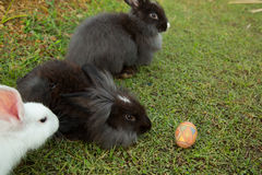 Cute bunnies and easter egg in the garden. Royalty Free Stock Photos