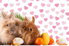 Cute bunnies with easter eggs. In front of a heart background royalty free stock photo