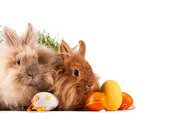 Cute bunnies with easter eggs Royalty Free Stock Photo