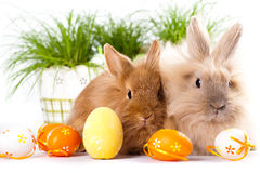 Cute bunnies with easter eggs Royalty Free Stock Photos