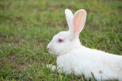 Cute bunnies in the garden. Stock Photography