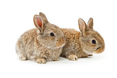 Cute bunnies isolated on white Stock Photo