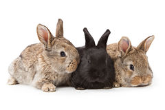 Cute bunnies isolated on white background Stock Images