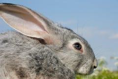 Cute bunny Stock Image