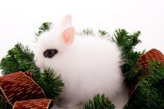 Cute bunny Stock Photos