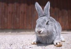 Cute bunny. Rabbit looking at a camera Royalty Free Stock Images