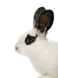 Cute bunny Stock Images