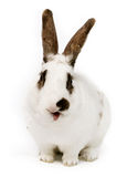 Cute bunny Royalty Free Stock Photography