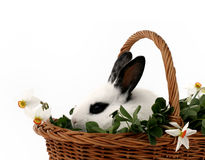 Cute bunny Royalty Free Stock Photo